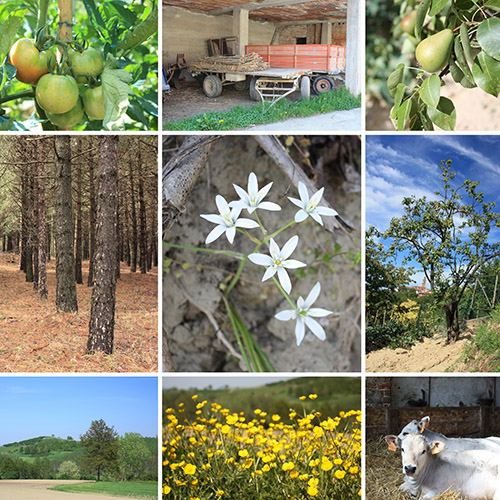 Seguros de agricultura y ganadería de Sanchis Asesores