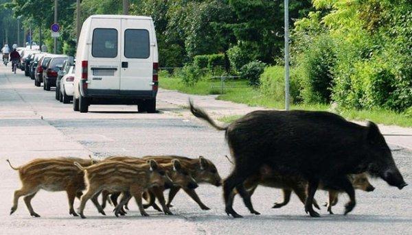 Seguro para accidentes con animales en Sanchis asesore